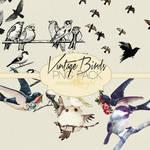 Vintage Birds Png Pack #2