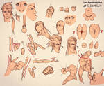Tutorials and Tips anatomy