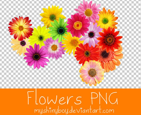 Flowers PNG by MyShinyBoy