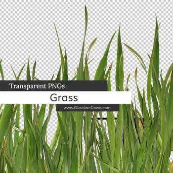 Grass Transparent PNGs