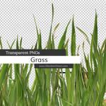 Grass Transparent PNGs