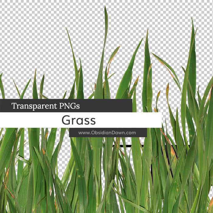 Grass Transparent PNGs by redheadstock