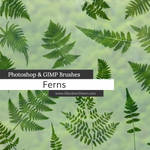 Ferns Photoshop and GIMP Brushes
