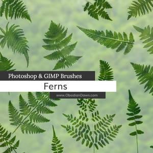 Ferns Photoshop and GIMP Brushes