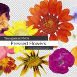 Pressed Flowers PNGs