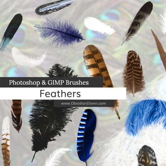 Feathers Photoshop and GIMP Brushes
