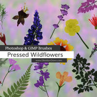 Pressed Wildflower Photoshop and GIMP Brushes by redheadstock