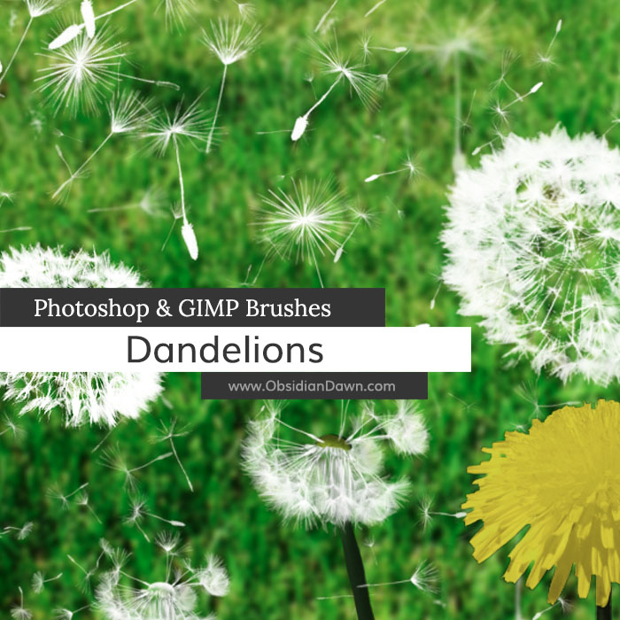Dandelions and Seeds Photoshop and GIMP Brushes