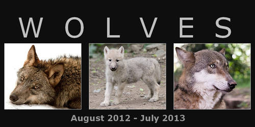 Wolf calendar 2012 - 2013 FOR FREE!!!!!!!!!!!!!!!! by woxys