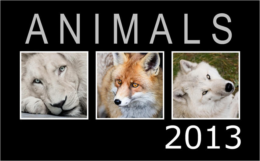 ANIMAL CALENDAR 2013 FOR FREE!!!! by woxys