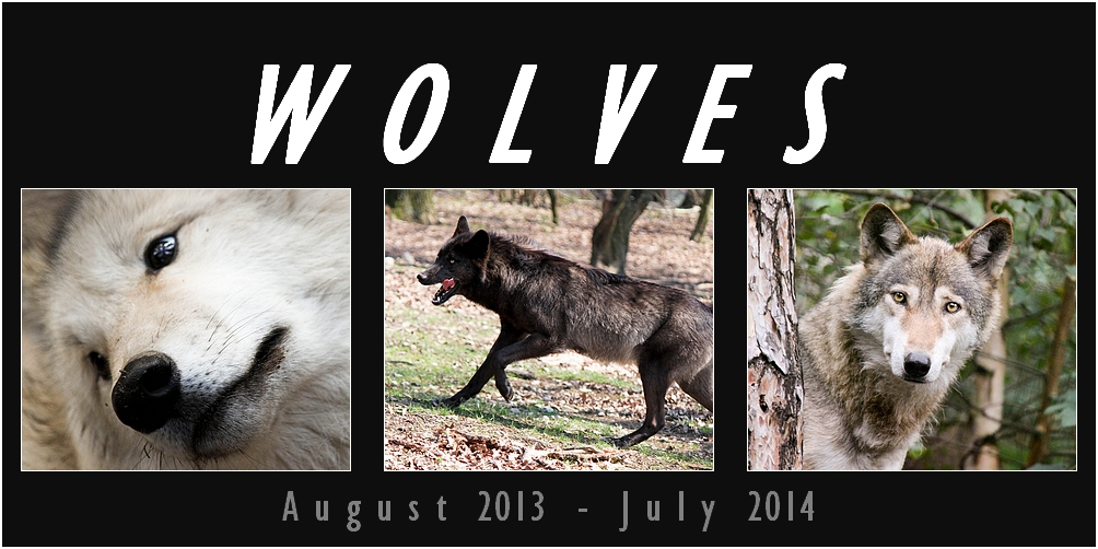 WOLF calendar 2013 - 2014 ----- FOR FREE!!!!!