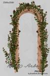UNRESTRICTED - Garden Rose Arbor