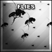 Brush Set 004: Flies