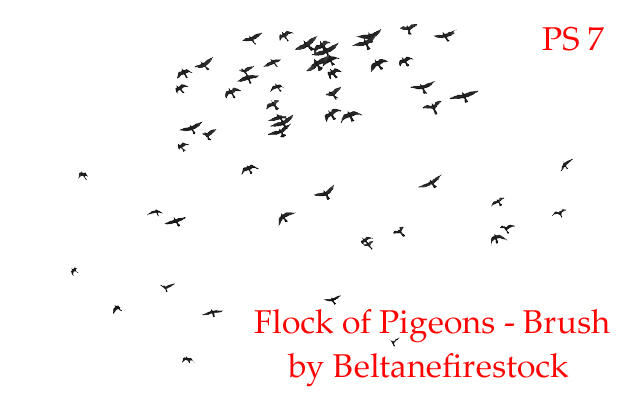 Flock of Pigeons Brush for PS7 by BeltaneFireStock
