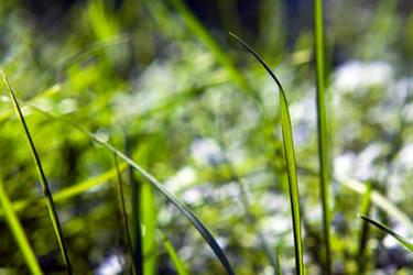 Grass Wallpaper Pack by K-Photos