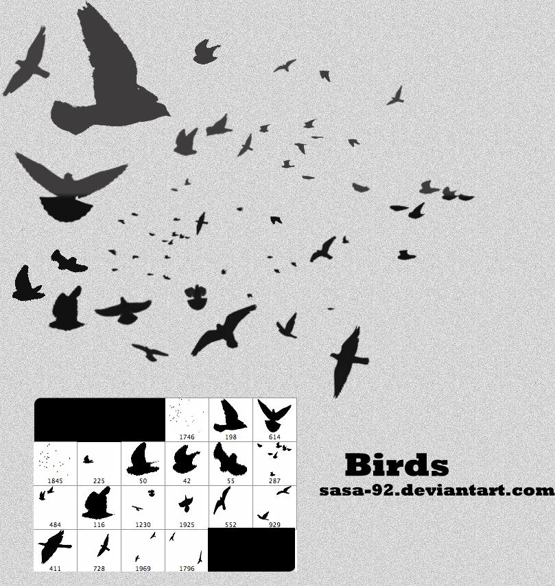 Birds brushes by sasa-92