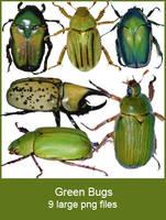 Green Bugs pngs by KingaBritschgi