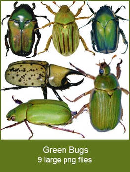 Green Bugs pngs