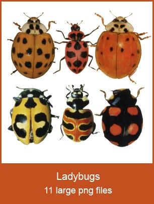 Ladybug pngs by KingaBritschgi