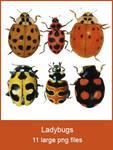 Ladybug pngs