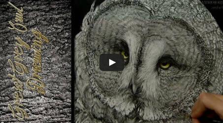 Great Grey Owl - Timelapse