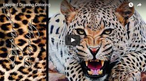 Leopard Drawing Timelapse