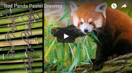 Red Panda Timelapse by AmBr0