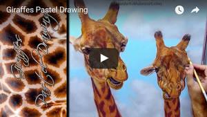 Giraffes Timelapse