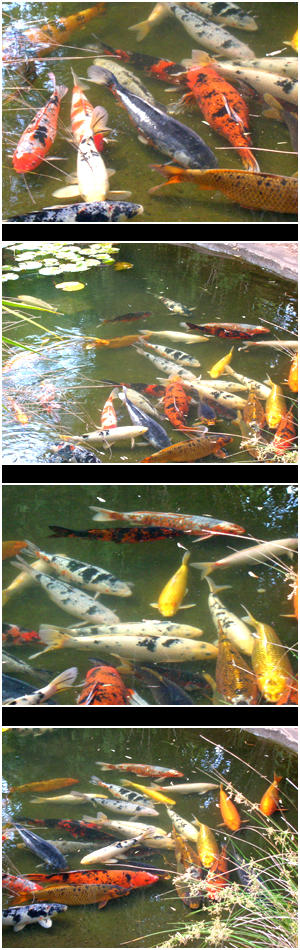 Koi Pond Pack by cosmos-Resources
