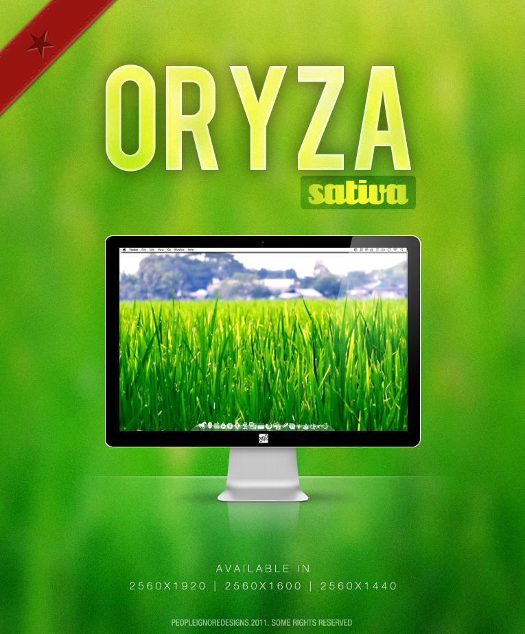 Oryza Sativa by jlgm25