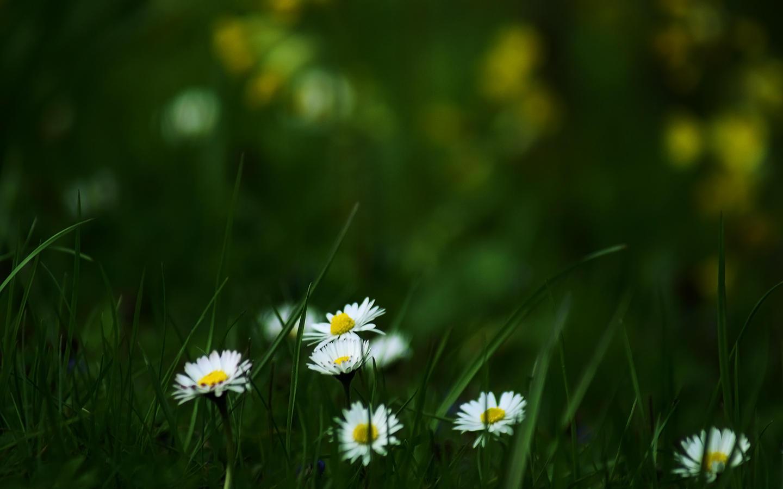 Hidden Spring WP Pack by Ythor