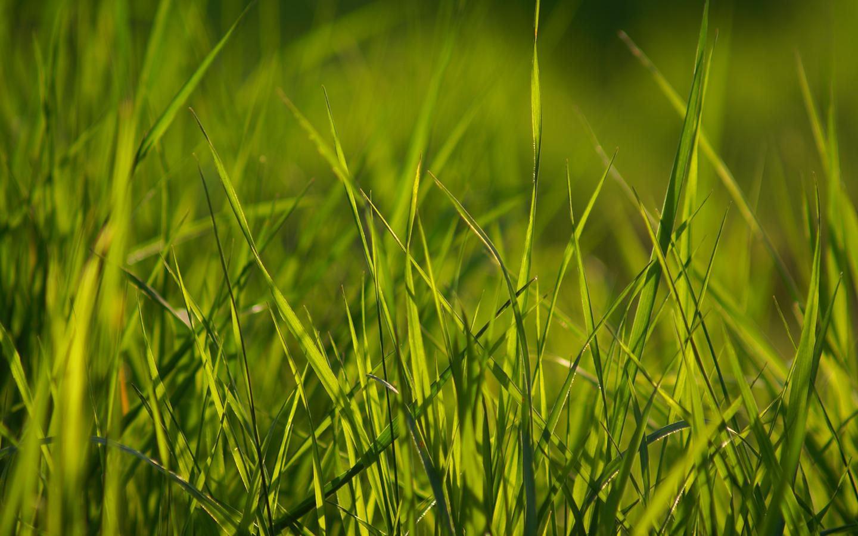 Spring Grass Wallpaper Pack
