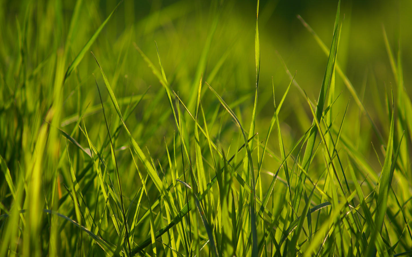 Spring Grass Wallpaper Pack by Ythor