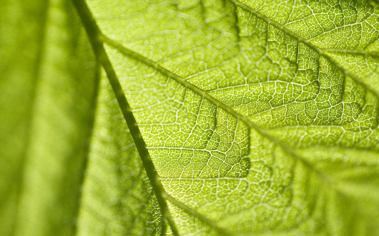 Leaf of life wallpaper pack by Ythor