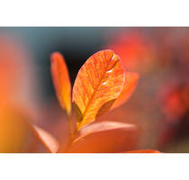 Almost Autumn Wallpaper Pack