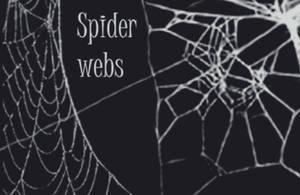 Spider web brushes by wyckedBrush