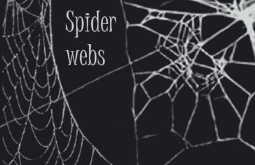 Spider web brushes by wyckedBrush