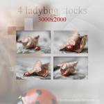 Ladybug stocks