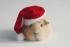 Santa booboo