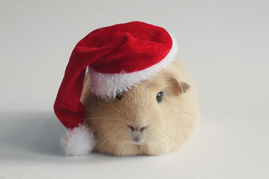 Santa booboo by lieveheersbeestje