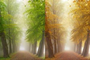 Autumn arrivals by meganjoy