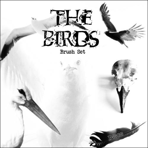 The Birds by XenomorphAkA