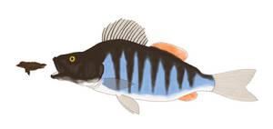 Ika-Taikaha