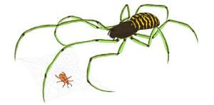 Four-legged net spider