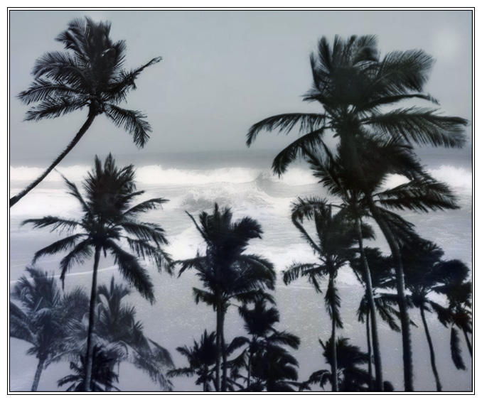 Palm Trees by flordelys-stock