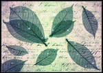 Wings_Leaves