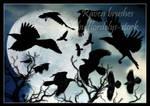 Raven Brushes