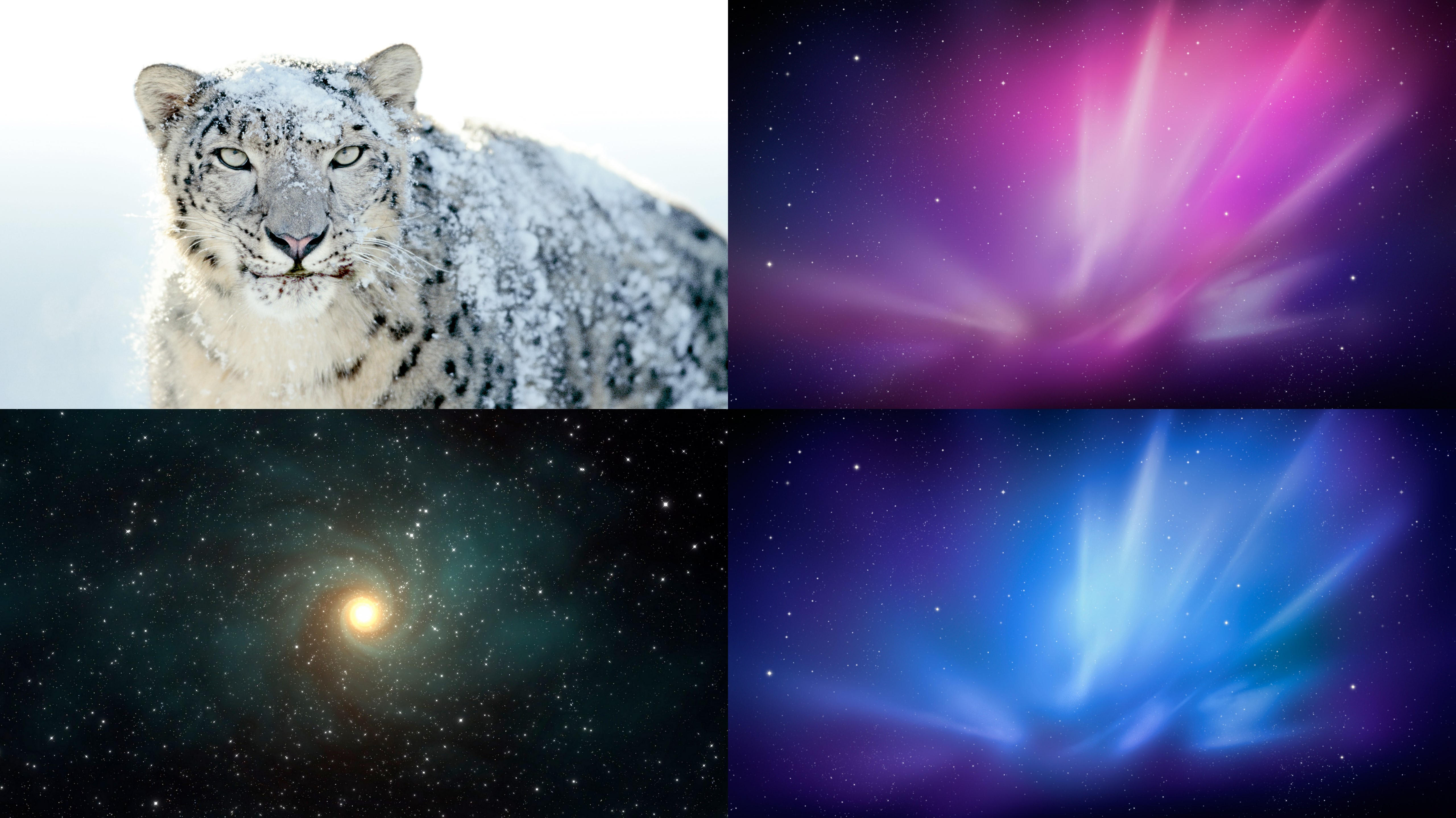 Snow Leopard Wallpaper Pack by akol12 on DeviantArt