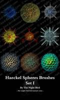 Haeckel Spheres Brushes 01 by the-night-bird