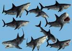 9 Monster Shark Stock PNG's